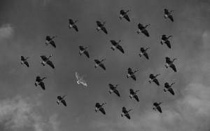 verflogen