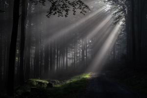 Peter Becker - Sonnenstrahlen im Wald
