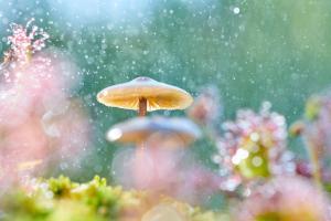 Jost Kühlborn - Pilze im Regen