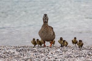 Horst Stenger - Familie