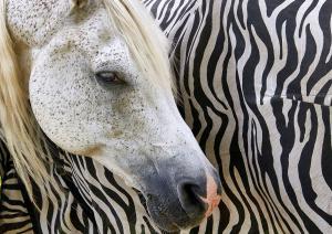 Monika Büttner - Zebrapferd
