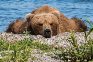 Harald Metzger - Entspannung am Seeufer