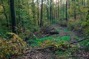 Waldspaziergang im Spessart