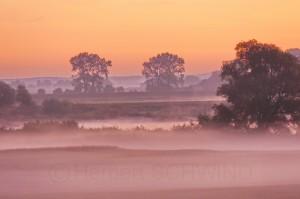 Morgennebel in der Elbtalaue